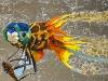 Дарья Багринцева. Silver dragonfly. 2014. 50x150 х.акр.поталь